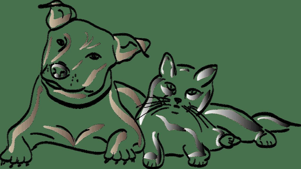 CBD Produkte Haustiere